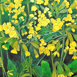 Cowslips 1