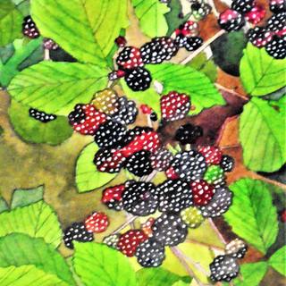 Bramble with blackberries