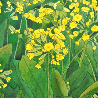 Cowslips 2