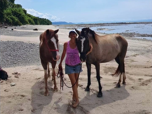 Inspiration behind the Horse Healing Journey, 30 Day Experience. Love Needed, fear be gone!