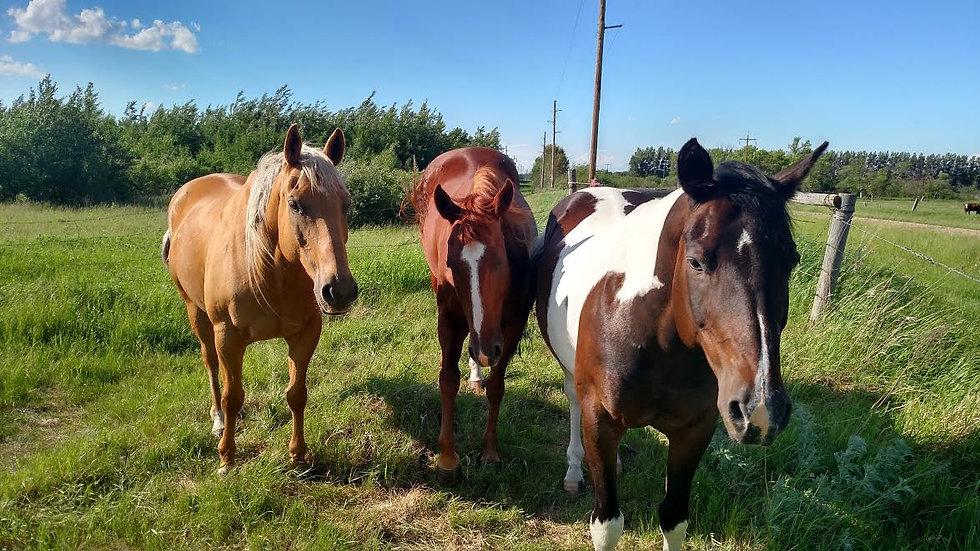 Vermont Herd Beautiful Horses