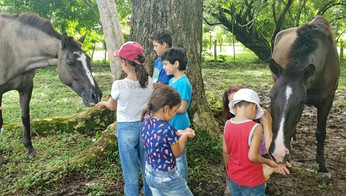 Kids learnig Compassionate Horsemanship