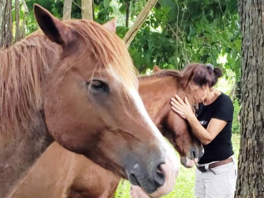 Horses Transform Fear into Love