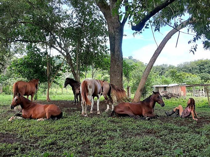Meet the Costa Rica Herd
