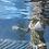 Thumbnail: Taking a Swim
