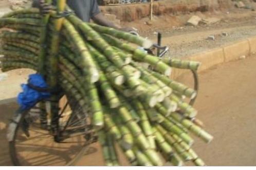 Sugarcanes (Ebikajjo)