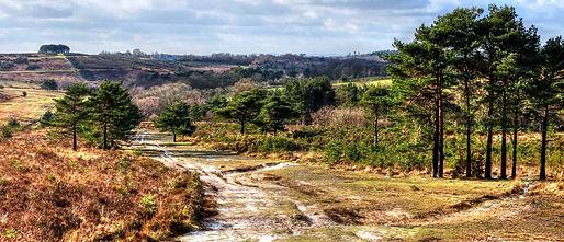 Ashdown forest.jpg