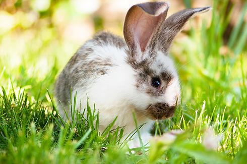 rabbit-image.jpg