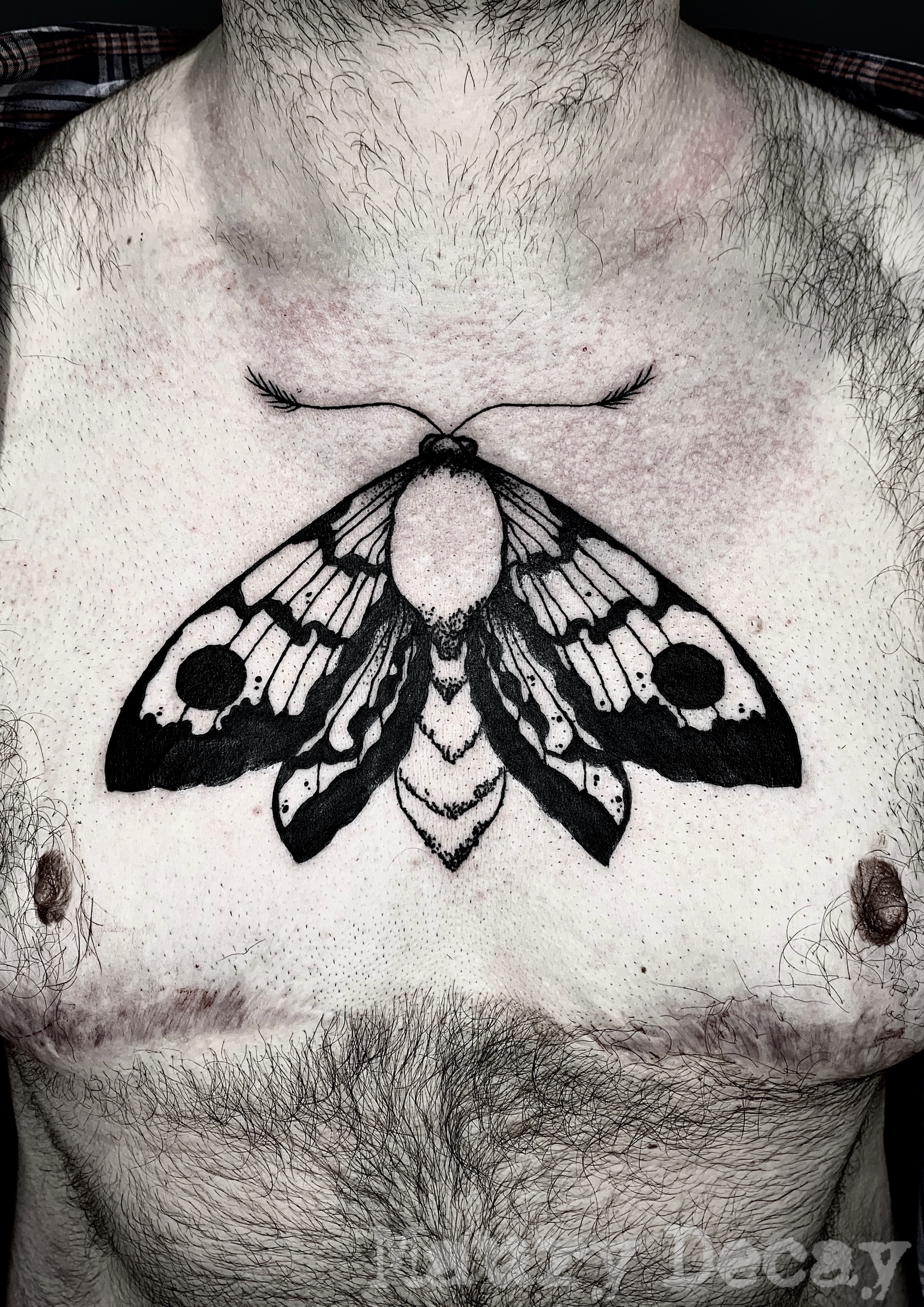 Blackwork moth