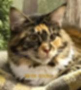 IMG_6036_edited_edited.jpg