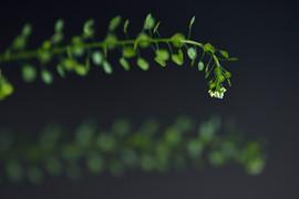 spring-0033.jpg