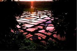 Paddy fields & fish farms