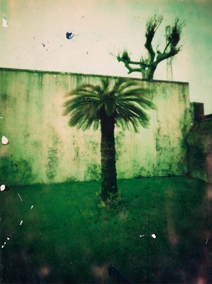 Palme, Azoren