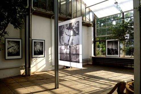 Ausstellung Botanischer Garten Erlangen II