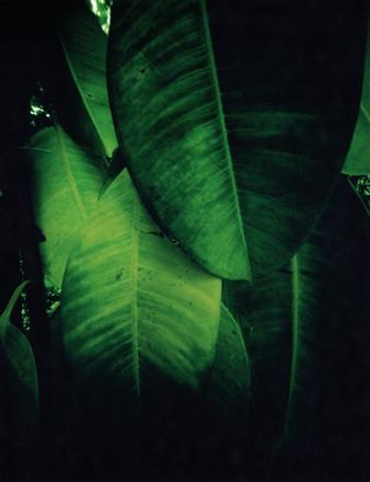 Orto Botanico Camerino II