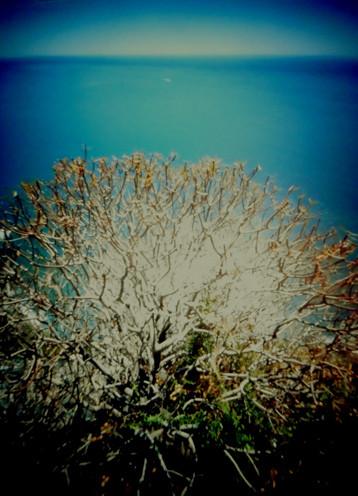 Cinque Terre, Corniglia Detail