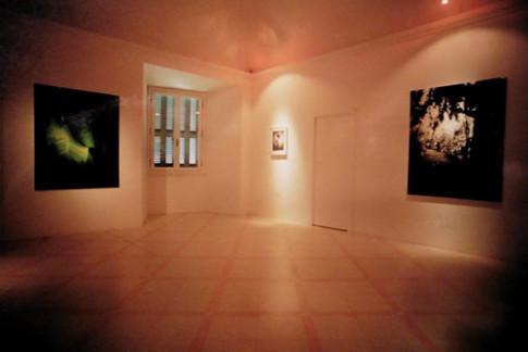 Ausstellung Botanik Camerino III