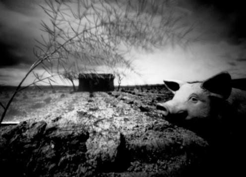Kulisse Schwein