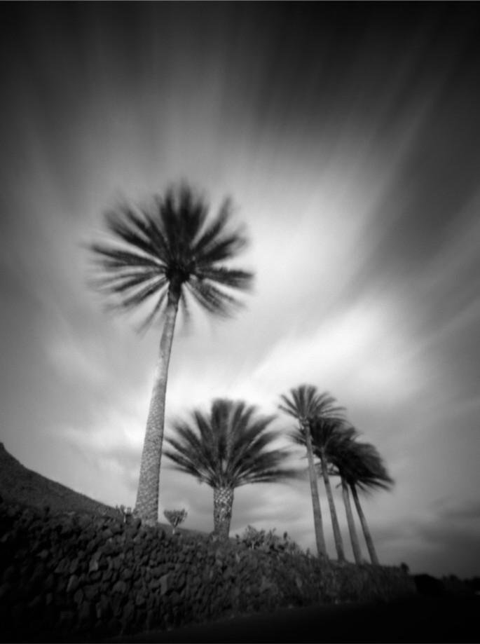 Palmen I, Lanzarote