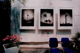 Ausstellung Botanischer Garten Erlangen V