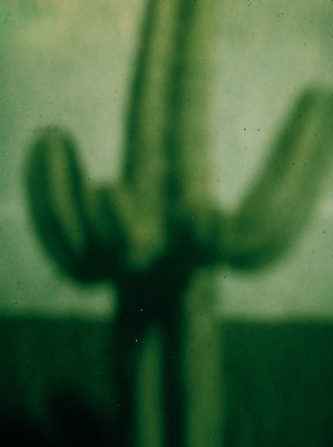 Kaktus I. Lanzarote