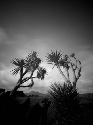 Yucca II, Lanzarote