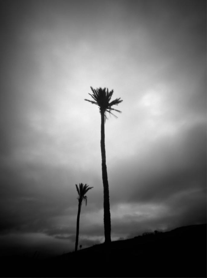 Palmen VII