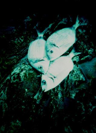 Cinque Terre, Monterosso Detail