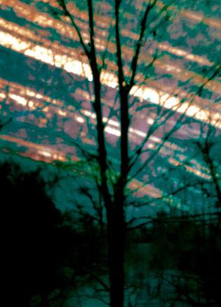 Wald 19