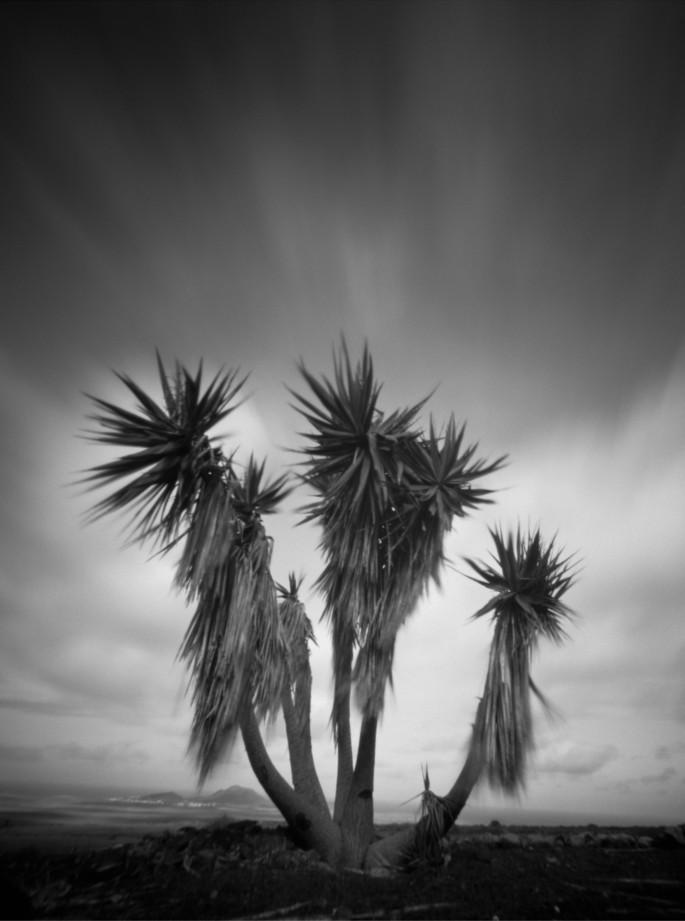 Yucca I, Lanzarote
