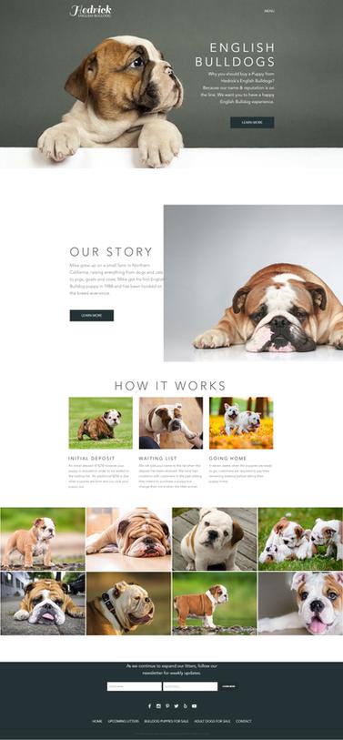 English Bulldogs- Pet Web Design Project