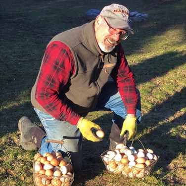 Collecting Eggs