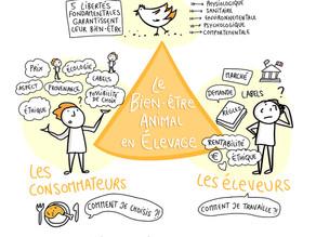 Améliorer le bien-être des animaux d'élevage, s'impliquer même quand on n'est pas du métier ?