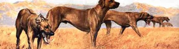 RhodesianLine.jpg