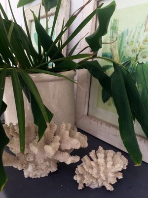 Coral and plant.jpg