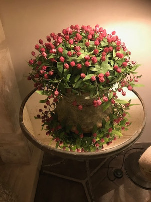 Plant and end table.jpg
