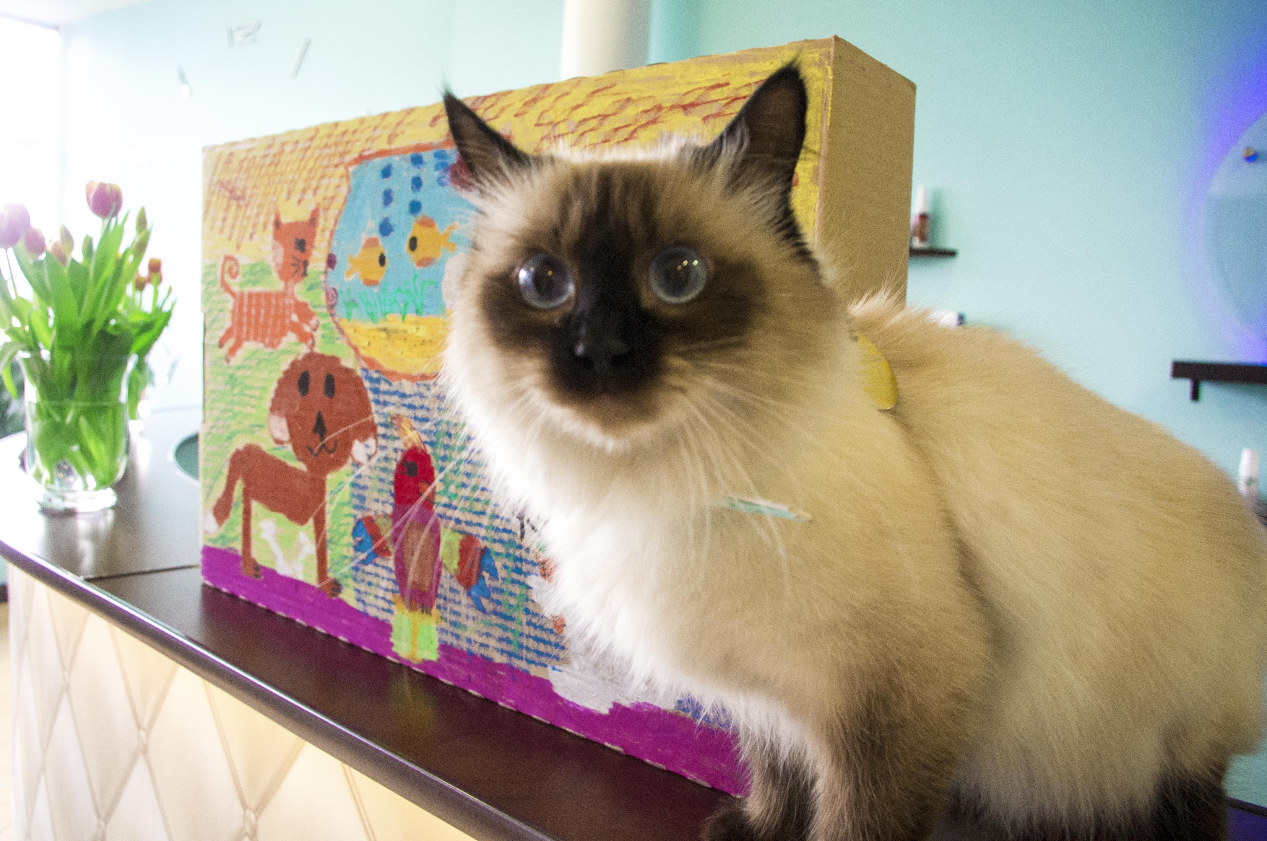 Opieka nad Hodowlami Kotów i Psów