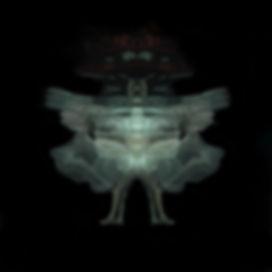 insect_MG_2407 Kopie 2.1.jpg