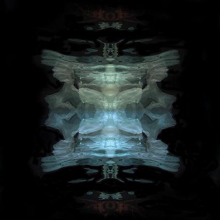 insect_MG_2407 Kopie 3.jpg