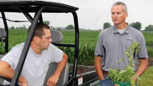 Dicamba Weed Control Slips: What It Means for Growers, Retailers