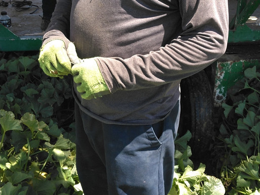 USING REQUIRED PPE DURING PESTICIDE APPLICATIONS AND IN AREAS WHERE PESTICIDES ARE APPLIED.