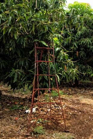 סולם על העץ.jpg
