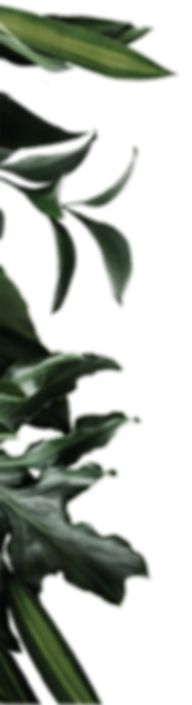 planta lua morena-01_edited.png
