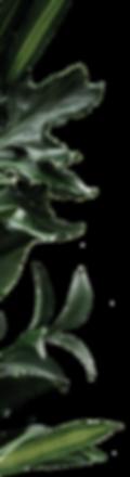 planta lua morena-01.png