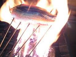 地魚のたたきや炙り料理が人気