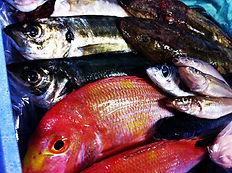 山形県宇部より毎日空輸される鮮魚たち