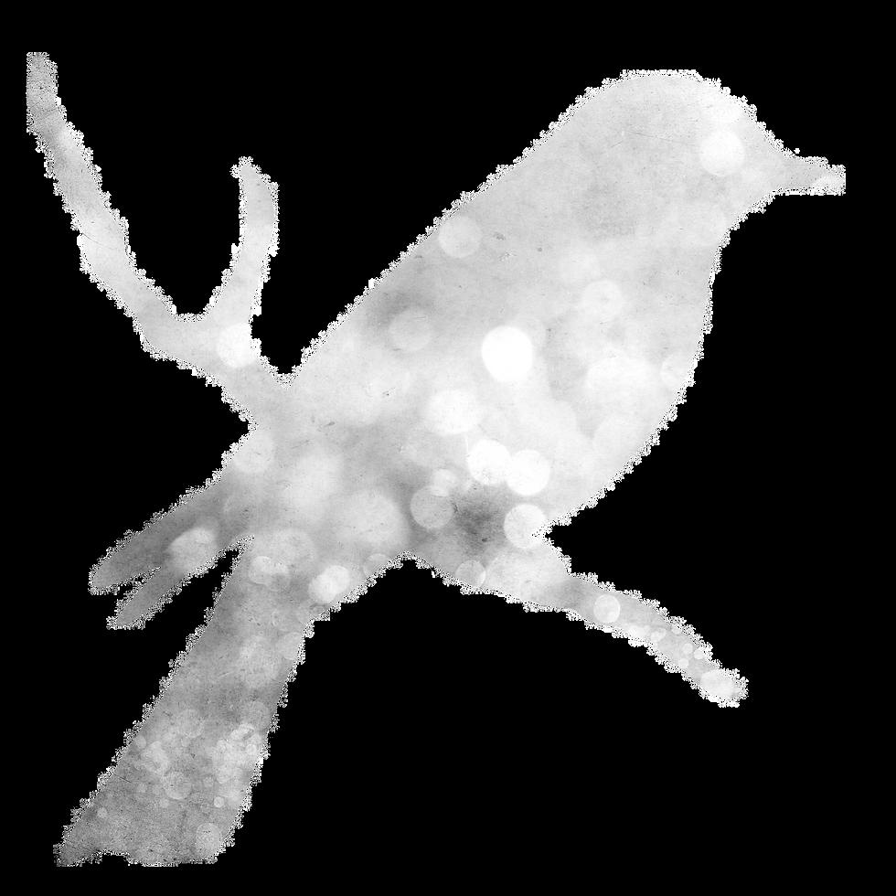 bird-1467364_1920_edited.png