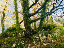 Grace Ashram Landscape
