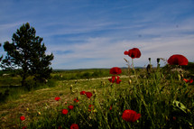 ashram meadows