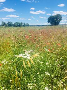 meadows around the ashram